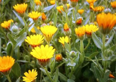walking-dimension-flowers (11)