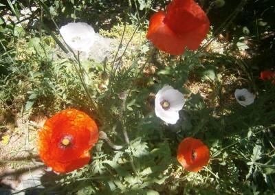 walking-dimension-flowers (19)