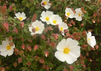 walking-dimension-flowers (3)