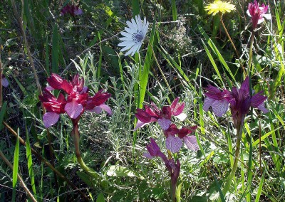 walking-dimension-flowers (41)