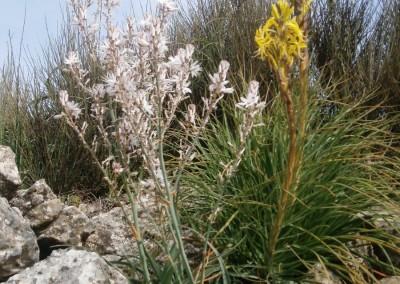 walking-dimension-flowers (7)