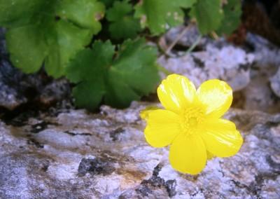walking-dimension-flowers (9)